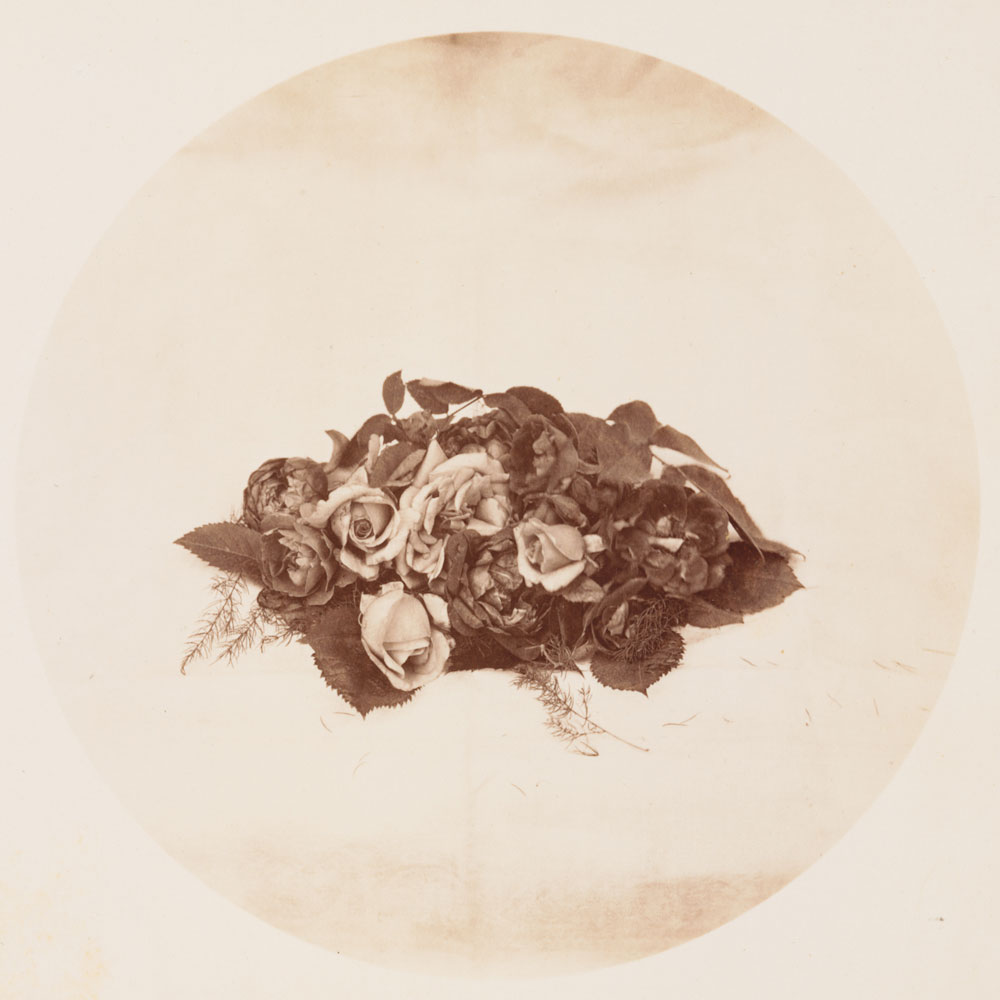 Watkins Unnumbered View - Roses