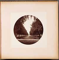 Unnumbered - Avenue of Orange Trees, Sunny Slope
