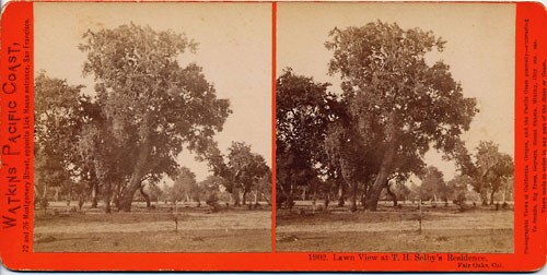 #1902 - Lawn View at T. H. Selby's Residence, Fair Oaks, Cal.