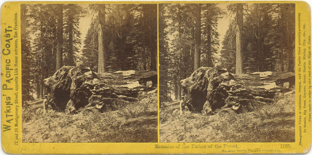 Watkins #1165 - Remains of the Father of the Forest