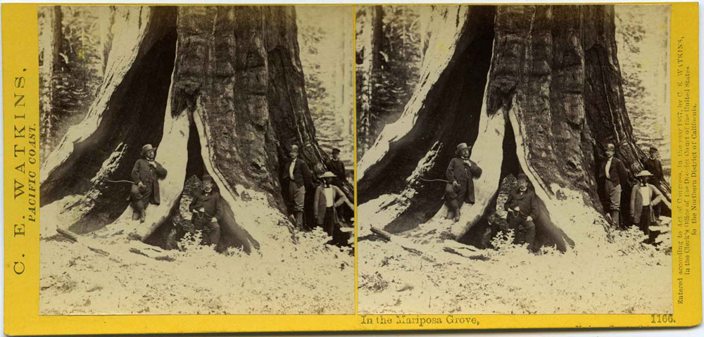 Watkins #1166 - In the Mariposa Grove, Mariposa County, Cal.