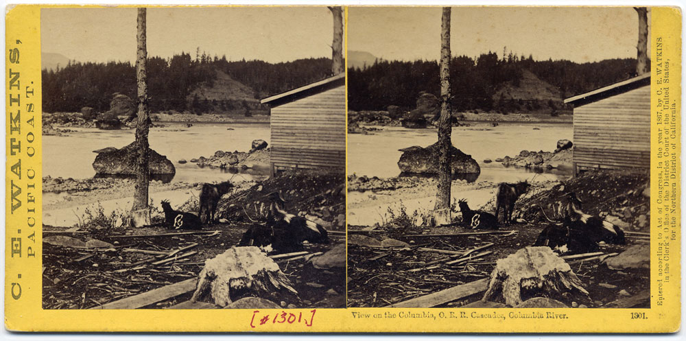 Watkins #1301 - View on the Columbia, Oregon Railroad, Cascades, Columbia River
