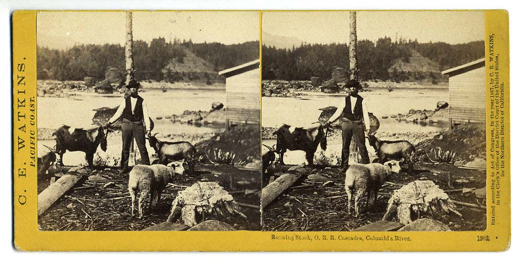 Watkins #1302 - Roaming Stock, O. R. R. Cascades, Columbia River.