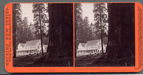 #3500 - Mammoth Tree Grove Hotel, Mammoth Tree Grove, Calaveras Co., Cal.