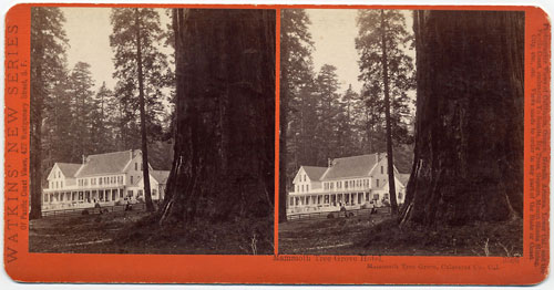 #3506 - Mammoth Tree Grove Hotel, Mammoth Tree Grove, Calaveras Co., Cal.