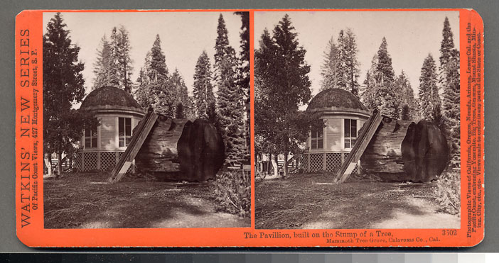 Watkins #3502 - The Pavilion, built on the Stump of a Tree, Mammoth Tree Grove, Calaveras Co., Cal.