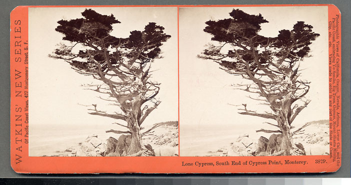 Watkins #3879 - Lone Cypress, South End of Cypress Point, Monterey, Cal.