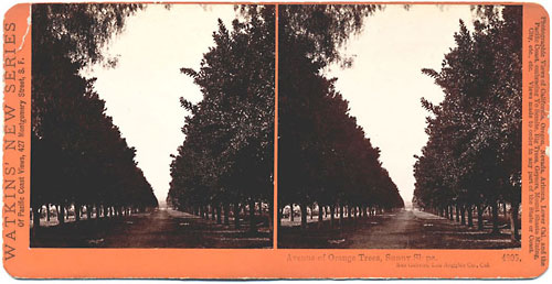 #4805 - Avenue of Orange Trees, Sunny Slope, San Gabriel, Los Angeles Co., Cal.
