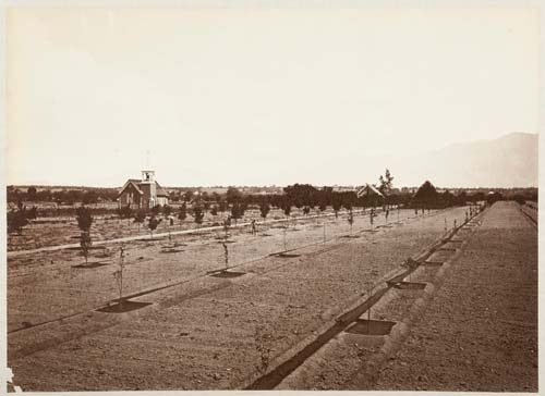 #1155 - Dobbins Orchard and Residence, Showing Method of Irrigation, San Gabriel Valley, Los Angeles County
