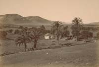 1204 - Olive and Palm Orchard, Mission San Diego de Alcala, San Diego County