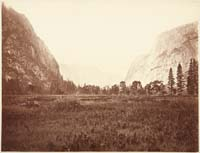 71 - View down Yosemite Valley, Meadow Scene