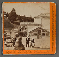 1645 - Sea Lions, Woodward Gardens, San Francisco