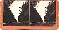 4805 - Avenue of Orange Trees, Sunny Slope, San Gabriel, Los Angeles Co., Cal.