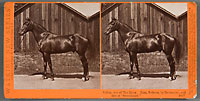 4817 - Sultan, Son of the Moor, Dam, Sultana, by Delmonico, and Sire of