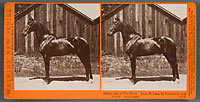 4819 - Sultan, Son of the Moor, Dam, Sultana, by Delmonico, and Sire of