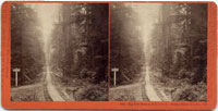 5001 - Big Tree Station, S.P.C.R.R.  Felton, Santa Cruz Co., Cal.