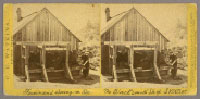 Unnumbered View - Ferdinand shoeing an Ox. The Blacksmith Shop S. V. W. W.