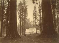 990 - Mammoth Tree Grove Hotel, Calaveras Mammoth Trees