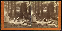 5007 - Harrison Camp, Big Trees, Felton