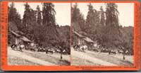 5020 - Glenwood Magnetic Springs, Santa Cruz Co., Cal., Hubert & Luff, Proprietors.